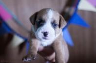fotos mascotas RaquelMuñoz-25