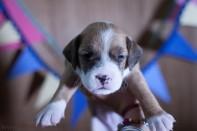 fotos mascotas RaquelMuñoz-26