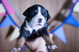 fotos mascotas RaquelMuñoz-28