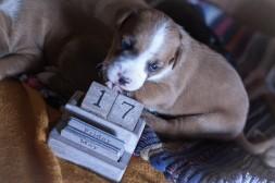 fotos mascotas RaquelMuñoz-30