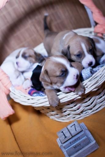 fotos mascotas RaquelMuñoz-5